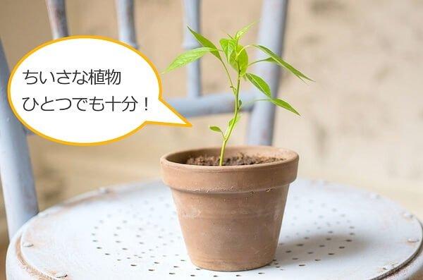 小さな植物ひとつでも心の癒しになる