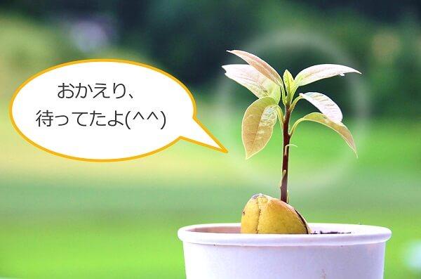 植物は心の寂しさを埋めてくれる