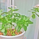 ココロの隙間をそっと埋めてくれる植物を飼おう!ベランダ栽培入門ガイド①
